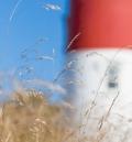 Nauset Light and Grass