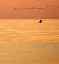<center>Kayak & Geese