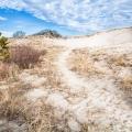 <center>Sandy Neck Dune